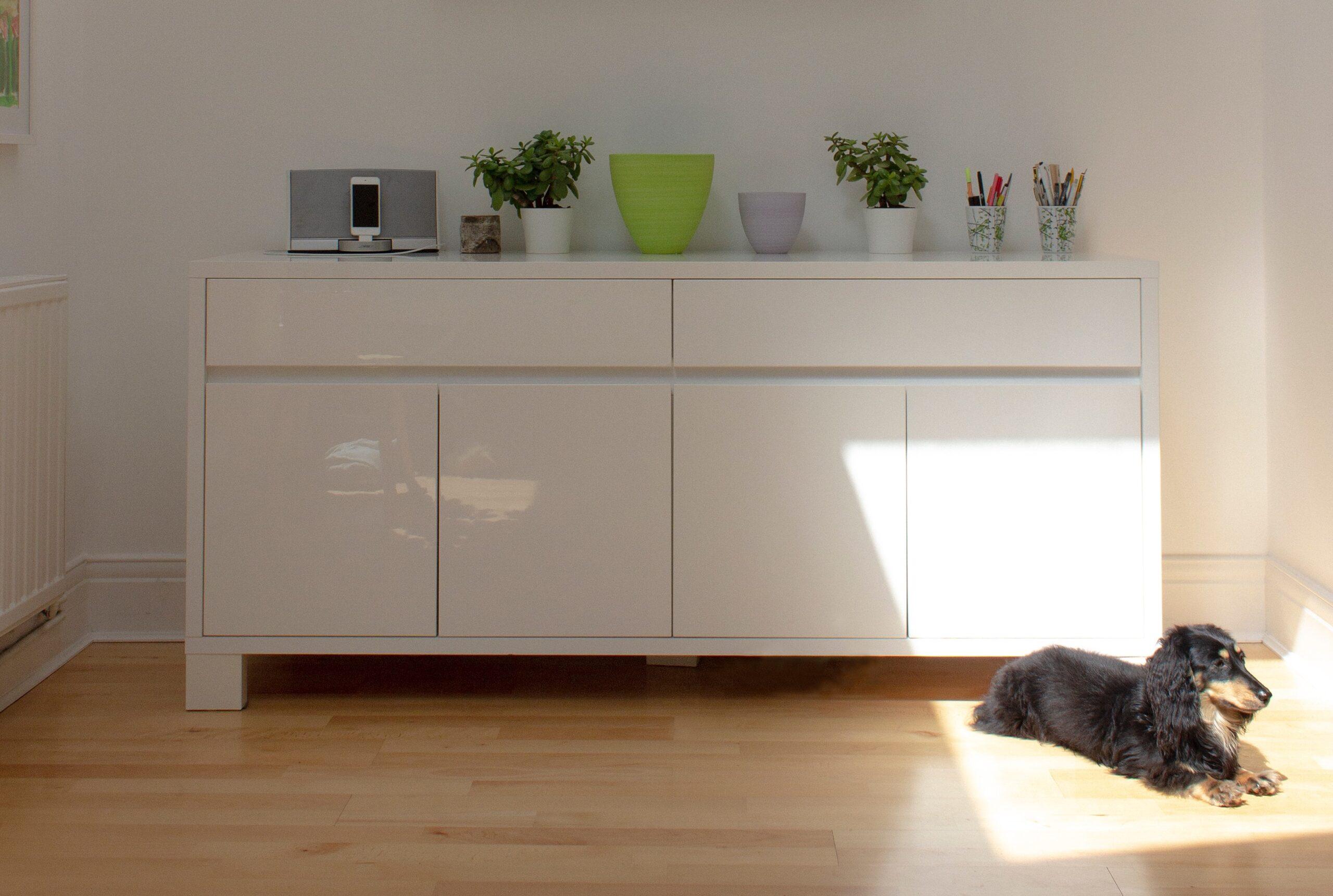 laminált padló és kutya a napfényben